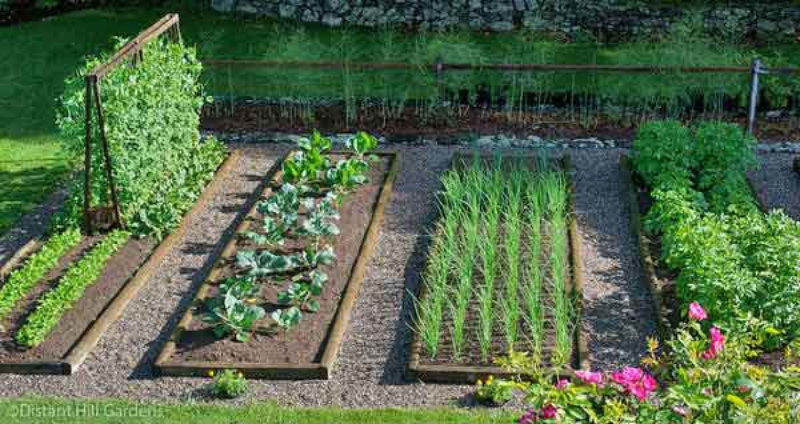 Sebze bah esinde ba ar l olmak i in 7 alt n kural for Fruit and vegetable garden design
