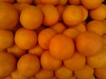 Citrus sinensis - Portakal - Orange